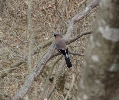 soku_30344.jpg :: 動物 鳥 野鳥 自然の鳥 未記入鳥