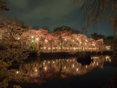 soku_30360.jpg :: 風景 自然 川 桜 夜桜