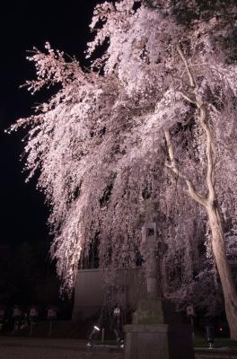 soku_30377.jpg :: 植物 花 桜 枝垂れ桜 夜桜