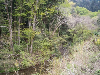soku_30431.jpg :: 風景 自然 山 新緑 ボディキャップレンズ