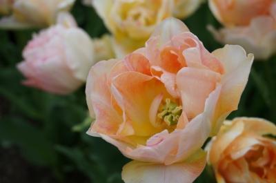 soku_30531.jpg :: 植物 花 オレンジ色の花