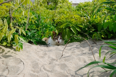 soku_30555.jpg :: 動物 哺乳類 猫 ネコ