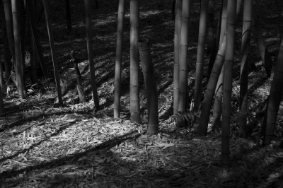 soku_30582.jpg :: 風景 自然 森林 竹林