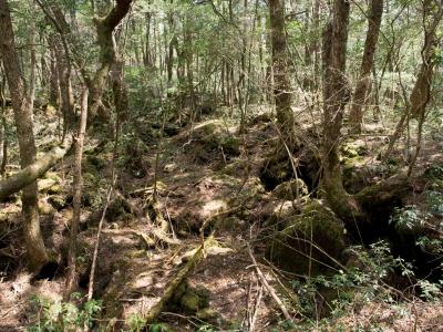 soku_30604.jpg :: 風景 自然 森林 樹海