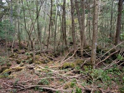 soku_30605.jpg :: 風景 自然 森林 樹海