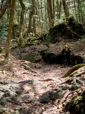 soku_30606.jpg :: 風景 自然 森林 樹海