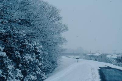 soku_30683.jpg :: 大雪 スナップ 冬