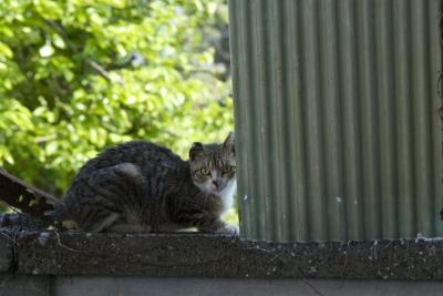 soku_30693.jpg :: 咄嗟に撮った猫 s5pro,zoom-nikkor 35-105mm f/3.5 4.5