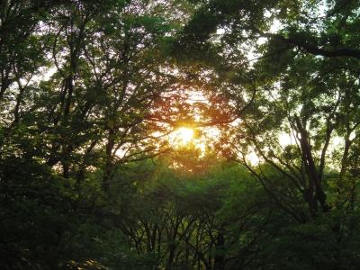 soku_30799.jpg :: 風景 自然 樹木 空 朝日 朝焼け 日の出