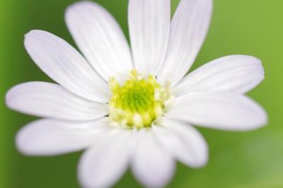 soku_30844.jpg :: 植物 花 by Niigata