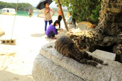 soku_30867.jpg :: ねこ 猫 沖縄 石垣島 川平湾 海
