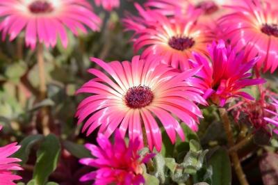 soku_30889.jpg :: 植物 花 ピンクの花