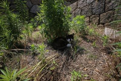 soku_30975.jpg :: sigma 12-24 動物 哺乳類 猫 ネコ
