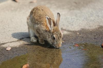 soku_31090.jpg :: うさぎ 動物 哺乳類 兎 ウサギ