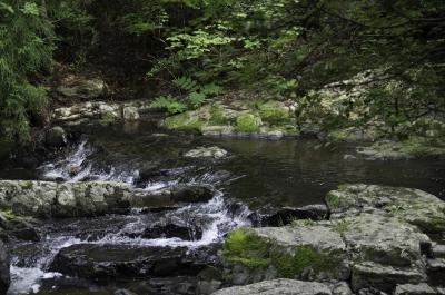 soku_31101.jpg :: 風景 自然 川 渓流 るり渓