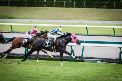 soku_31104.jpg :: 運動 スポーツ 競馬 馬