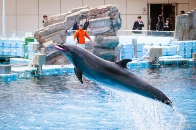 soku_31129.jpg :: 水族館 名古屋港水族館 イルカ ショー 動物