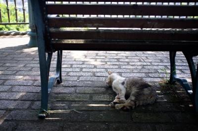 soku_31170.jpg :: 風景 街並み 動物 哺乳類 猫 ネコ