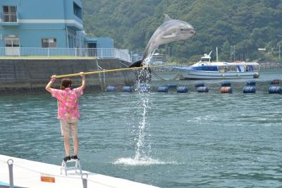 soku_31172.jpg :: 動物 海の生物 イルカ