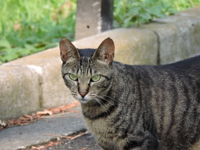 soku_31183.jpg :: 動物 猫