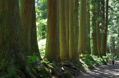 soku_31197.jpg :: 杉 嫌儲 風景 自然 森林 針葉樹林