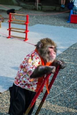 soku_31200.jpg :: 動物 哺乳類 猿 サル 浅草 猿回し