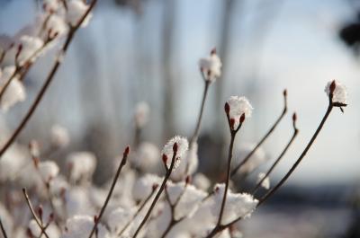 soku_31309.jpg :: 写真 雪
