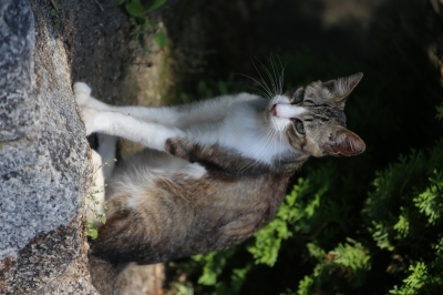 soku_31349.jpg :: 動物 哺乳類 猫 ネコ