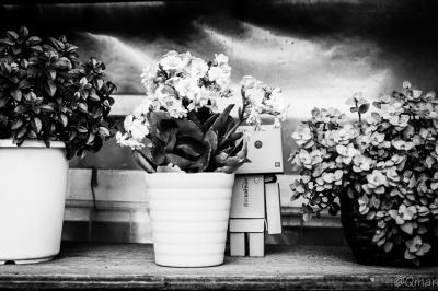 soku_31351.jpg :: モノクロ アート 工芸品 クラフト 人形 フィギュア ダンボー 風景 花 鉢植え