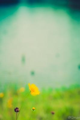 soku_31352.jpg :: 植物 花 オレンジ色の花 風景 自然 公園 池 水分
