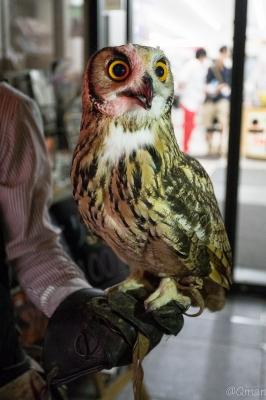 soku_31354.jpg :: 動物 鳥 猛禽類 梟 フクロウ 街 繁華街 風景