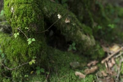 soku_31409.jpg :: 山 植物 苔 自然