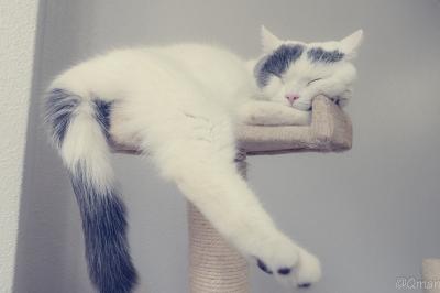 soku_31412.jpg :: 動物 哺乳類 猫 ネコ