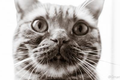 soku_31441.jpg :: 動物 哺乳類 猫 ネコ