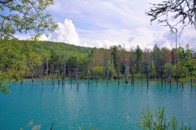 soku_31456.jpg :: 北海道 美瑛 青い池