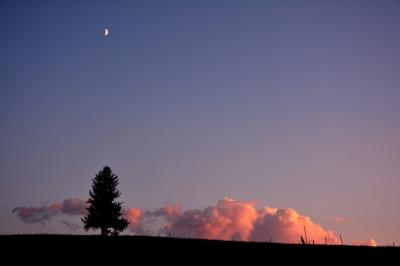 soku_31459.jpg :: 北海道 美瑛 夕日の木 夕焼け 月