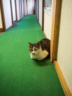 soku_31490.jpg :: 動物 ペット 猫