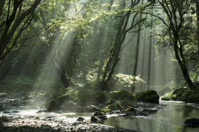 soku_31639.jpg :: 風景 渓谷 川 自然 水 朝日 光