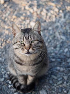 soku_31678.jpg :: 動物 哺乳類 猫 ネコ