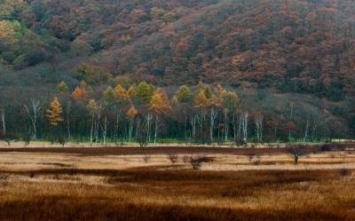 soku_31793.jpg :: 風景 自然 山 紅葉