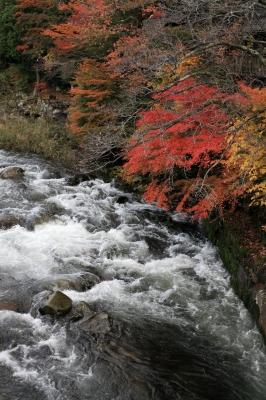 soku_31809.jpg :: 風景 自然 紅葉 奥津渓