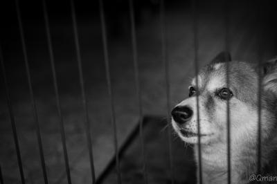 soku_31814.jpg :: 動物 ペット 犬 モノクロ