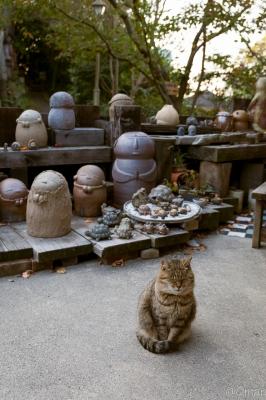 soku_31849.jpg :: 動物 哺乳類 猫 ネコ ペット 焼き物 風景