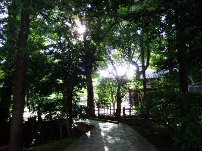 soku_31861.jpg :: 風景 自然 森林 雑木林 小径