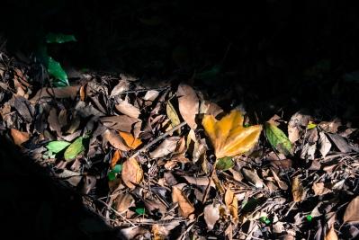 soku_31863.jpg :: 植物 草葉 枯葉 落ち葉