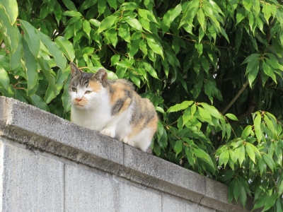 soku_31896.jpg :: 動物 哺乳類 猫 ネコ