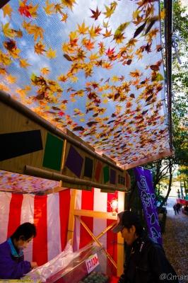 soku_31900.jpg :: 紅葉 自然 風景 山 森林