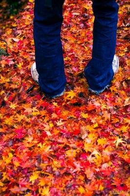 soku_31901.jpg :: 紅葉 自然 風景 山 森林