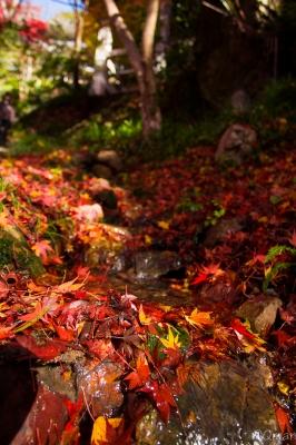 soku_31902.jpg :: 紅葉 自然 風景 山 森林