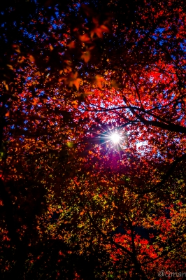 soku_31921.jpg :: 風景 自然 森林 紅葉 逆光